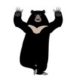 himalayan bear yoga yogi wild animal emoji black vector image vector image