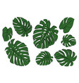 monstera leaves of a tropical plant sketch vector image vector image
