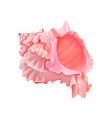 pink seashells under sea vector image