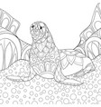 adult coloring bookpage a cute seal on the vector image vector image