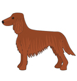 Irish Setter Dog vector image vector image