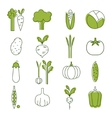 Simple Vegetable Set Handdrawn vector image
