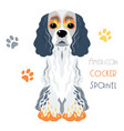 funny american cocker spaniel dog sitting vector image vector image