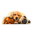 puppies king charles spaniel labrador and pug vector image vector image