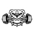 black and white of a bulldog with dumbbell vector image vector image