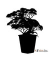 bonsai tree realistic style vector image