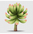 cactus flower on transparent background vector image