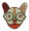 French bulldog in glasses vector image vector image