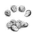 Hand drawn set of brussels sprouts sketch vector image vector image