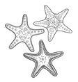 hand drawn starfish in black outline vector image