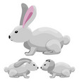 rabbits-3 vector image