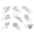 hands holding flowers outline female hand vector image vector image
