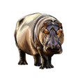hippopotamus from a splash watercolor colored vector image vector image
