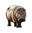 hippopotamus from a splash watercolor colored vector image vector image