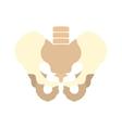 Human pelvis icon vector image vector image