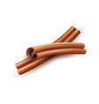 realistic dried cinnamon sticks spice and vector image