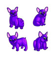 set of purple adorable french bulldog vector image