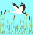 stork flying flat style vector image vector image
