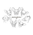 dog breed chihuahua set vector image vector image