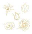 flower ornament set decoration line outline vector image