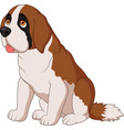 saint bernard dog breed vector image