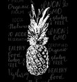 single sketch pineapple vector image vector image