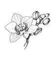 hand drawn black outline orchid on a white vector image vector image