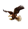 portrait of a bald eagle from a splash vector image vector image
