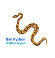 realistic ball python snake in art top view vector image
