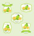 the theme pomelo vector image