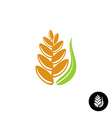 Wheat ear logo vector image vector image