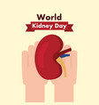 world kidney day medical part human healthy vector image