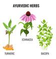 turmeric with rhizomes bacopa aquatic plant vector image