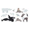 arctic animals polar animal cartoon cute bear vector image vector image
