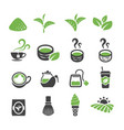 green tea icon vector image vector image