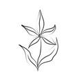 minimalist tattoo flower line art flourish vector image vector image