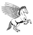pegasus vector image