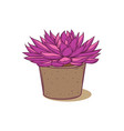 succulent plant in concrete pot hand drawn vector image vector image