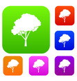 tree with a rounded crown set collection vector image vector image