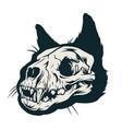 vintage cat skull concept vector image vector image