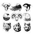 heads of animals for logo or sport symbols vector image