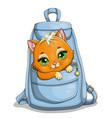 cute little kitten in pocket a blue bag vector image
