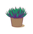 decoration plant succulent astroloba tenax for vector image vector image