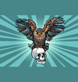 owl and human skull vector image