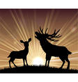 Silhouette a kangaroo and deer vector image vector image