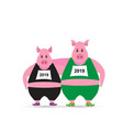 two pig in sport uniform running funny sportive vector image
