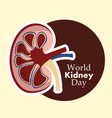 world kidney day poster care prevention vector image