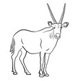 african antelope vector image