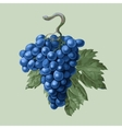 Cluster of grapes with a leaf vector image vector image