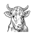 Cows head Hand drawn in a graphic style Vintage vector image vector image